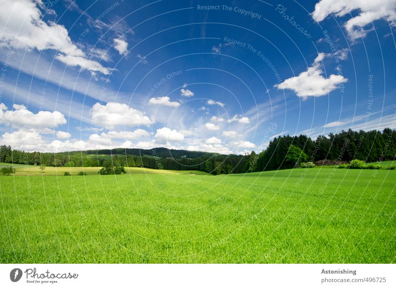 Shire? Environment Nature Landscape Animal Air Sky Clouds Horizon Summer Weather Beautiful weather Warmth Plant Tree Grass Bushes Foliage plant Meadow Field