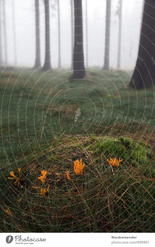 Nature Plant Tree Relaxation Calm Forest Autumn Grass Weather Fog Hiking Trip Agriculture Mysterious Meditation Moss