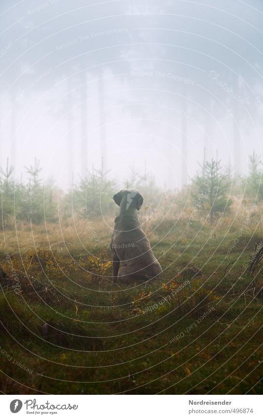 Instinct III Life Senses Calm Hunting Hiking Agriculture Forestry Plant Animal Elements Fog Rain Tree Lanes & trails Dog Observe Esthetic Wet Loyal