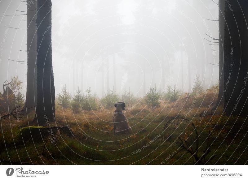 Dog Plant Tree Calm Animal Forest Dark Life Lanes & trails Rain Fog Hiking Wet Esthetic Elements Observe