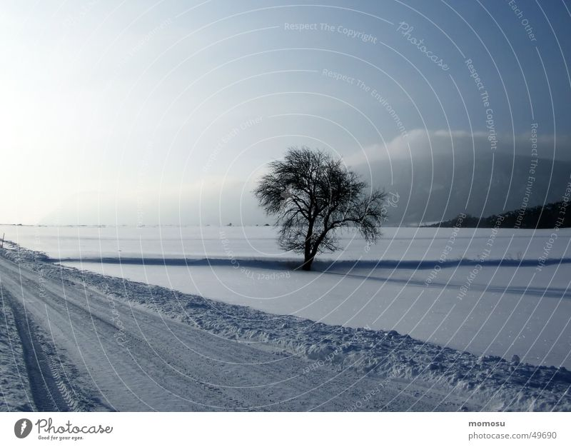 Sky Tree Sun Winter Clouds Street Snow Austria