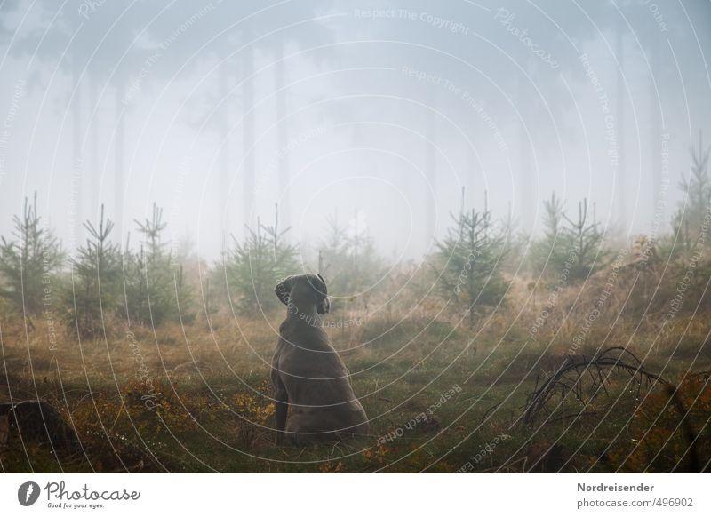instinct Life Senses Calm Hunting Hiking Agriculture Forestry Plant Animal Elements Fog Rain Tree Lanes & trails Dog Observe Esthetic Wet Loyal Love of animals