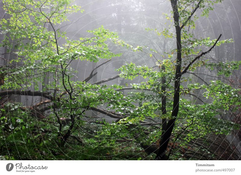 Nature Green Plant Tree Black Forest Dark Environment Life Emotions Death Autumn Wood Natural Rain Glittering