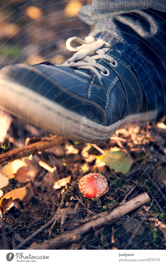 Achtung!... He wants to grow. Thanksgiving Hallowe'en Climbing Mountaineering Hiking Environment Nature Earth Autumn Beautiful weather Plant Bushes Moss