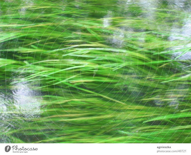Water Green Grass Movement River Underwater plant Brook Flow Overgrown Grass green Seaweed