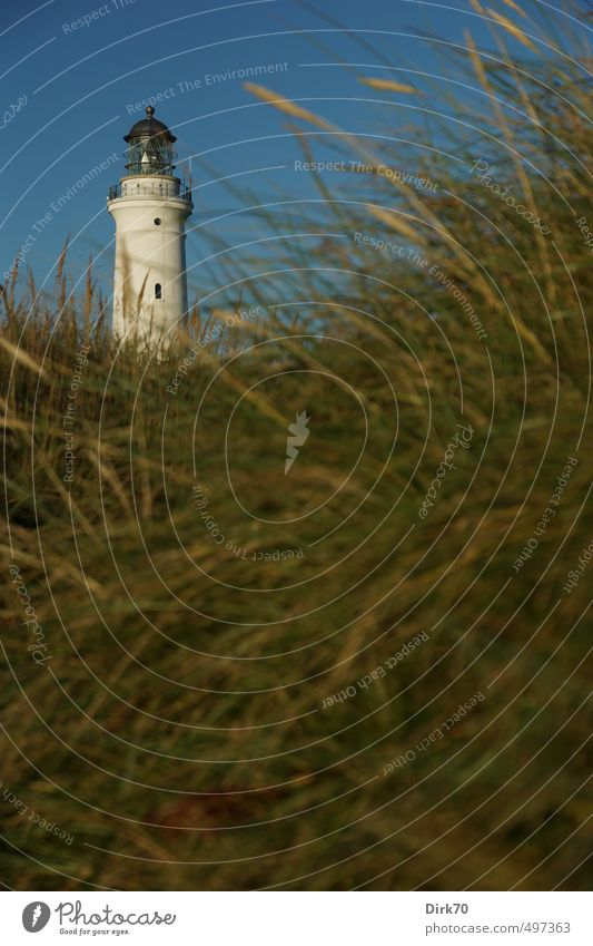 Hirtshals Fyr in the dunes Vacation & Travel Summer vacation Cloudless sky Beautiful weather Plant Grass marram grass Meadow Coast North Sea Beach dune