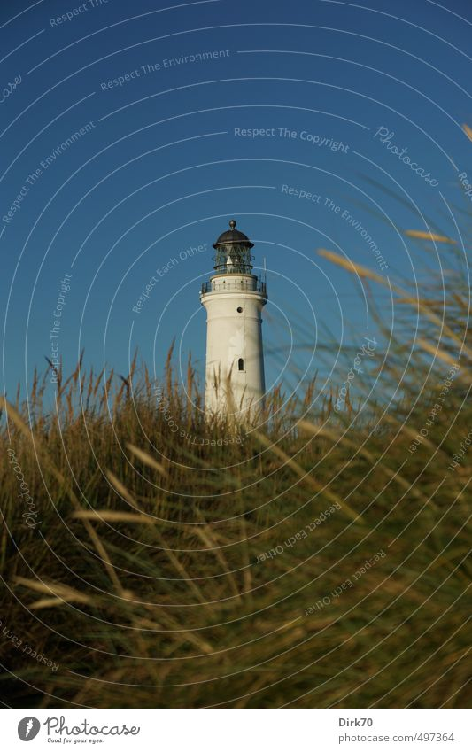 Lighthouse of Hirtshals in the evening light Logistics Cloudless sky Sunlight Summer Beautiful weather Grass Foliage plant marram grass Beach dune Coast