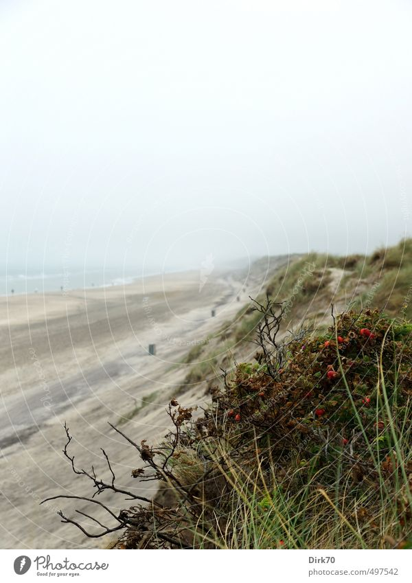 Green Water Summer Ocean Red Loneliness Landscape Beach Black Far-off places Grass Coast Gray Sand Weather Fog