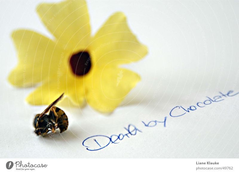 Nature White Flower Yellow Death Paper Insect Typography Wasps