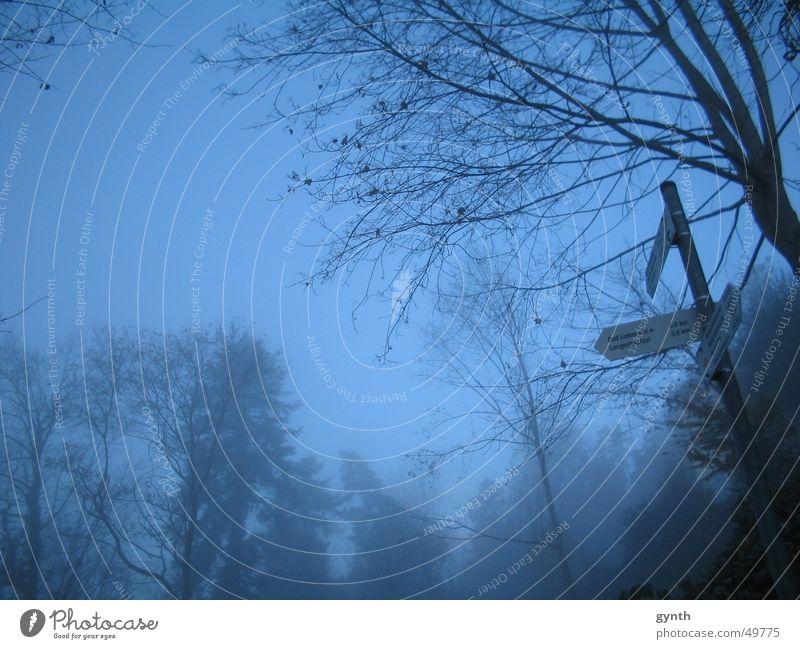 Nature Tree Blue Leaf Cold Autumn Sadness Lanes & trails Fog Grief Gloomy Fairy tale Road marking Magic Dreary Jinxed
