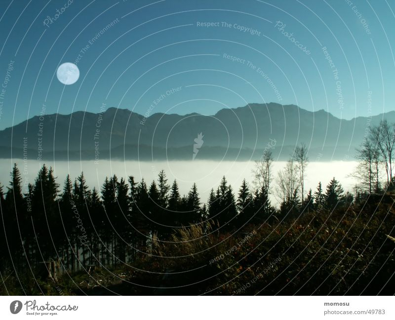 ...above the clouds Forest Full  moon Fog Clouds Light Austria Mountain Moon Sky