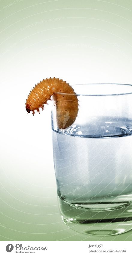 tequila and gone. Worm Spirits Schnaps glass Larva Drinking Beverage Glass Caterpillar Alcoholic drinks
