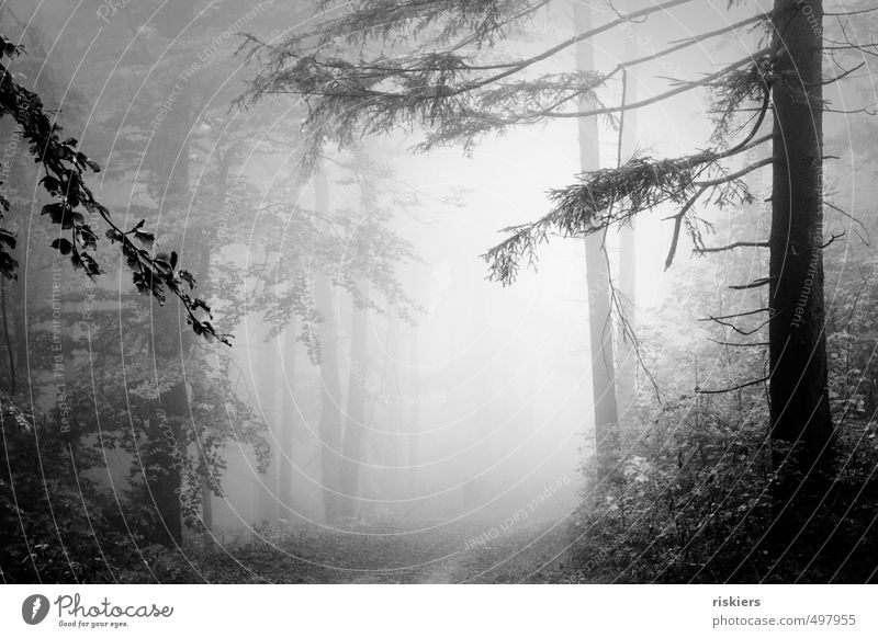 lost in fog Environment Nature Landscape Plant Autumn Fog Forest Illuminate Dark Cold Calm Longing Loneliness Black & white photo Exterior shot Deserted Dawn