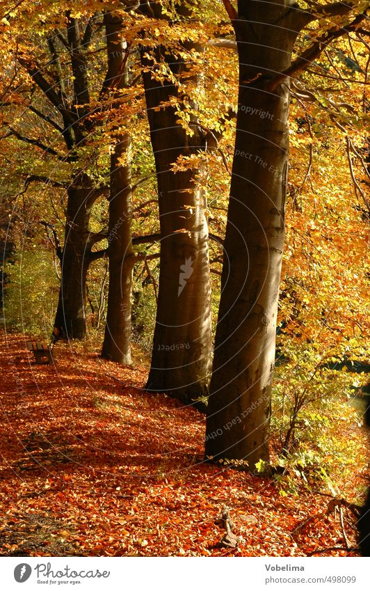 Nature Plant Tree Red Forest Yellow Environment Autumn Brown Gold