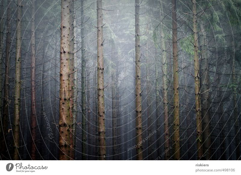 lost in trees Environment Nature Landscape Plant Autumn Fog Forest Threat Dark Creepy Cold Blue Power Calm Loneliness Colour photo Subdued colour Exterior shot