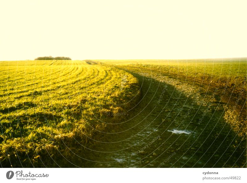 Sun Green Summer Far-off places Street Meadow Lanes & trails Landscape Moody Field