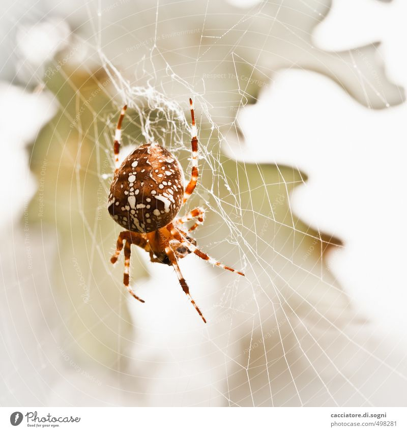 Always hungry Nature Animal Autumn Beautiful weather Wild animal Spider 1 Crucifix Net Aggression Threat Disgust Elegant Exotic Free Creepy Bright Small Natural