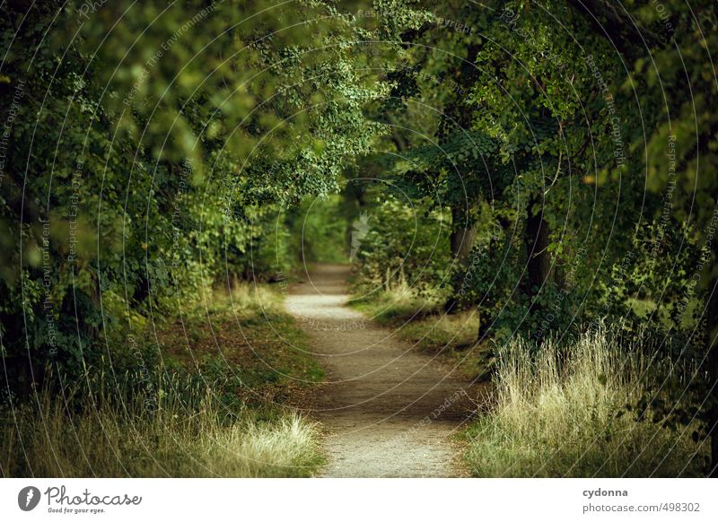The way Well-being Relaxation Calm Trip Hiking Environment Nature Landscape Summer Tree Forest Lanes & trails Beginning Loneliness Uniqueness Discover