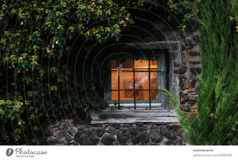 Window to the courtyard Environment Nature Plant Autumn Tree Bushes Leaf Foliage plant Wild plant Deserted Castle Park Courtyard Wall (barrier) Wall (building)