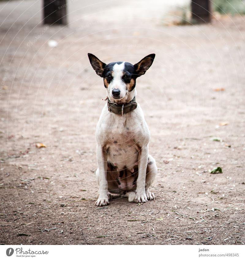 Animal best friend. Face Pelt Dog Animal face 1 Observe Looking Sit Cuddly Curiosity Cute Trashy Cool (slang) Loyalty Watchfulness Calm Resolve Serene Street