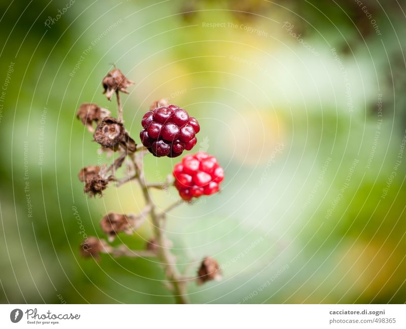 Nature Plant Colour Red Loneliness Calm Autumn Natural Healthy Small Freedom Idyll To enjoy Joie de vivre (Vitality) Sweet Beautiful weather