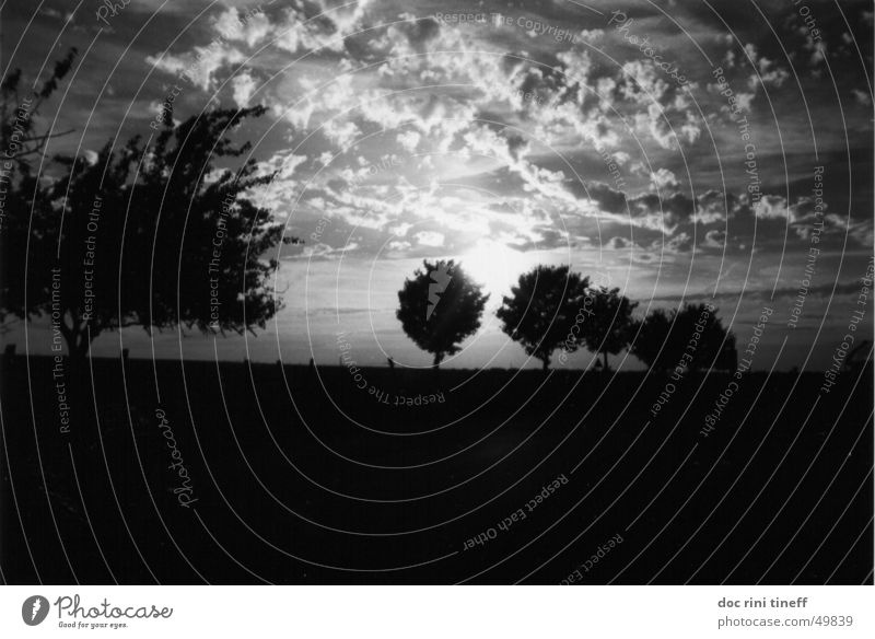 always after the sun Sunset Tree Clouds Sky Vest Black & white photo sunrise trees