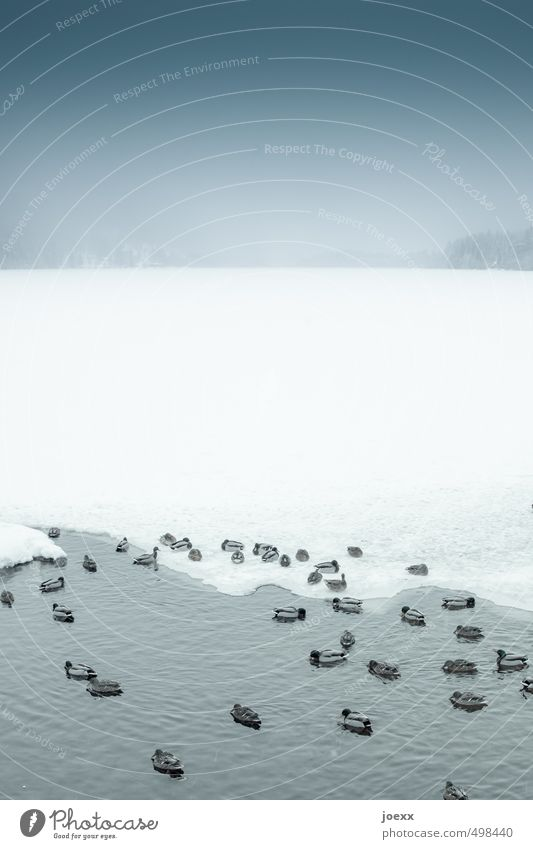 Sky Nature Blue White Water Winter Black Cold Snow Gray Swimming & Bathing Lake Horizon Bird Ice Idyll
