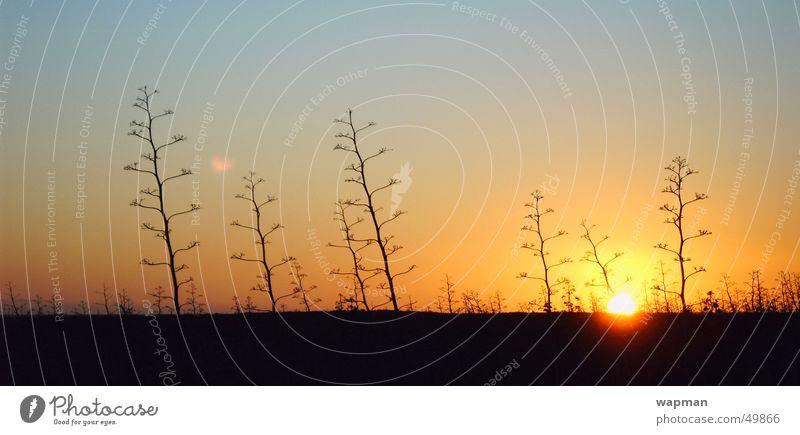 Cabo de Gata Spain Andalucia Coast Sunset Panorama (View) Dusk Cactus Large Panorama (Format)