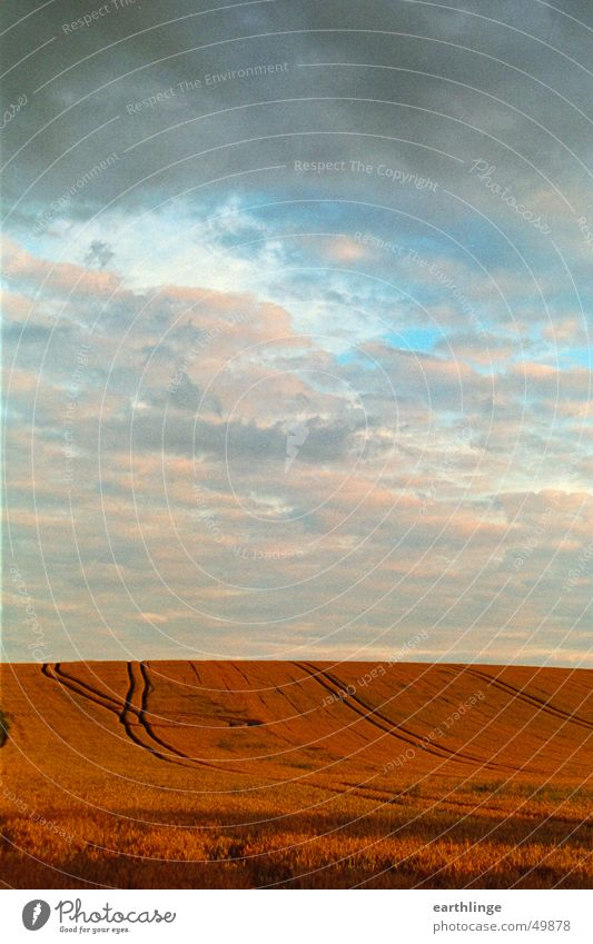 Sky Blue Red Clouds Far-off places Orange Field Horizon Tracks Grain Harvest Portrait format