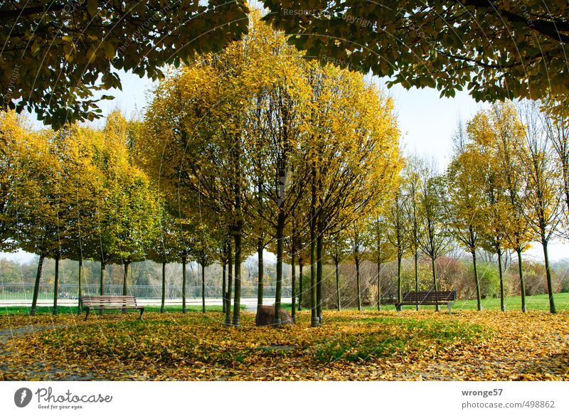 Nature City Plant Tree Yellow Autumn Germany Park Europe Beautiful weather Places River bank Autumn leaves Autumnal Symmetry Circular