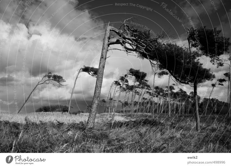 zugzwang Trip Freedom Environment Nature Landscape Plant Sky Clouds Horizon Climate Weather Beautiful weather Wind Gale Tree Grass Bushes Wild plant