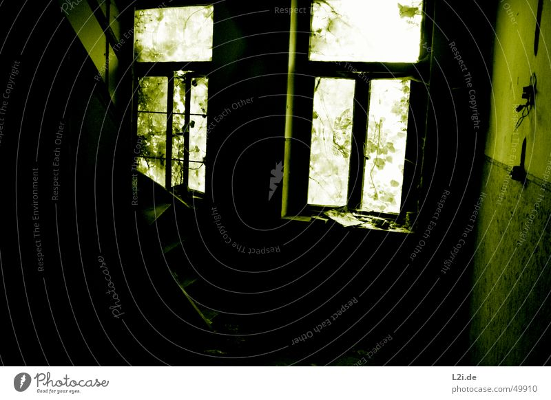 Nature Old White Green Leaf House (Residential Structure) Black Loneliness Dark Wall (building) Window Room Stairs Newspaper Creepy Tin