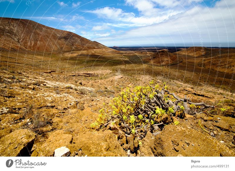 timanfaya Vacation & Travel Tourism Trip Adventure Summer Island Mountain Nature Landscape Plant Sand Sky Clouds Flower Park Hill Rock Stone Dirty Brown