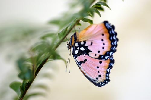 butterfly Animal Butterfly 1 Hang Brown Multicoloured Green Pink Black White butterflies Insect Plant Colour photo Macro (Extreme close-up) Copy Space right Day