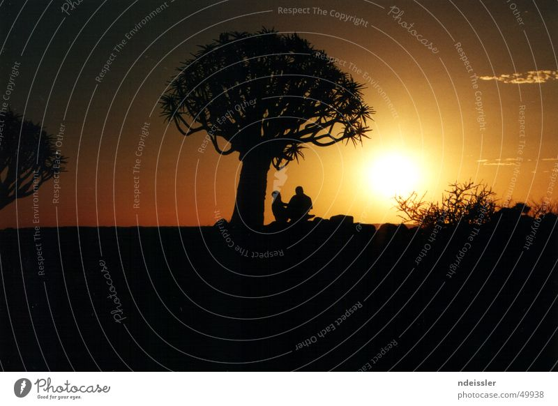Nature Tree Love Far-off places Freedom Happy Couple Together Empty Adventure In pairs Romance Africa Desert Namibia Nature reserve