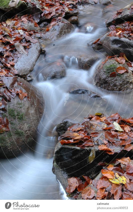 - autumnal water drifting - Leaf Autumn Brook Long exposure Water River Rock Stone Waterfall watery