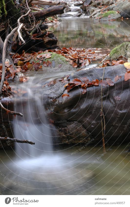 Water Leaf Autumn Stone Rock River Brook Waterfall