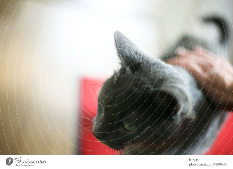Cat Human being Woman , a Royalty Free Stock Photo from