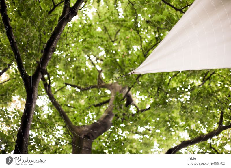 awning Environment Nature Summer Beautiful weather Tree Leaf Treetop Leaf canopy Garden Park Sun sail Rope Triangle To hold on Hang Sharp-edged Firm Green White