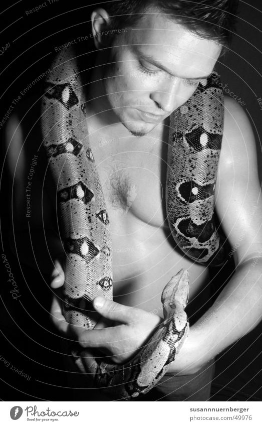 Man Eroticism Snake Animal