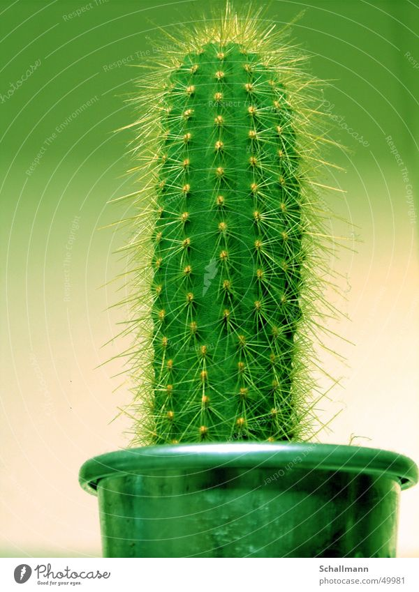 Green Plant Desert Pot Cactus Thorn