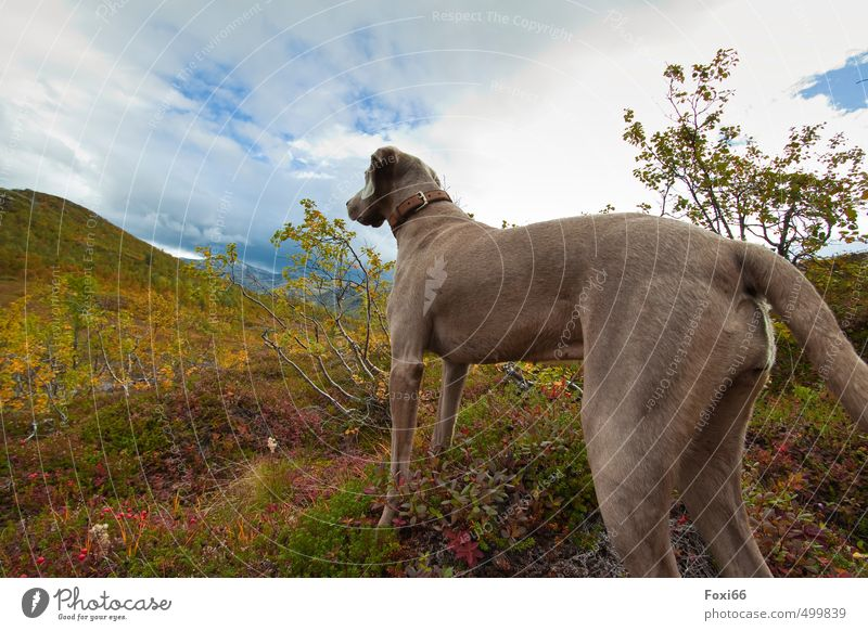 Dog Sky Plant Tree Relaxation Landscape Calm Clouds Animal Mountain Autumn Bushes Island Beautiful weather Observe Hill