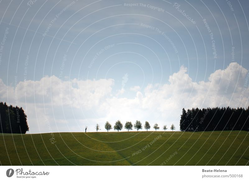 The row of congratulators is long ... Agriculture Forestry Nature Landscape Plant Sky Clouds Tree Field To enjoy Stand Esthetic Exceptional Blue Green White