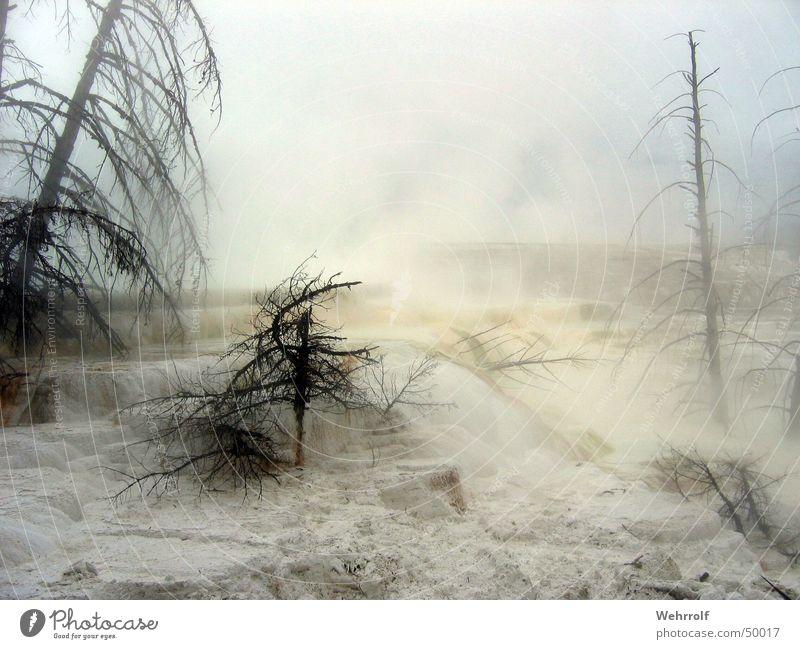Water Sky Tree Moody Fog Wet Smoke Lime Limestone