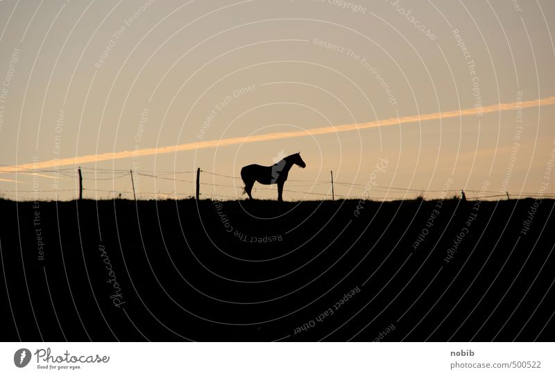 lonely horse Ride Equestrian sports Pasture Landscape Cloudless sky Sunrise Sunset Field Animal Pet Farm animal Horse 1 Stand Wait Brown Yellow Black Moody