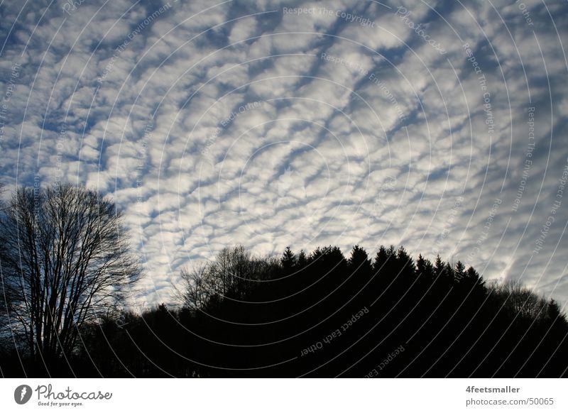 Sky White Tree Sun Blue Black Clouds Cumulus Altocumulus floccus