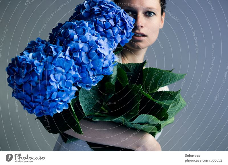 favorite weasel monster flowers Human being Feminine Woman Adults Face 1 Nature Plant Flower Leaf Blossom Hydrangea Hydrangea blossom Hydrangea leaf Blossoming