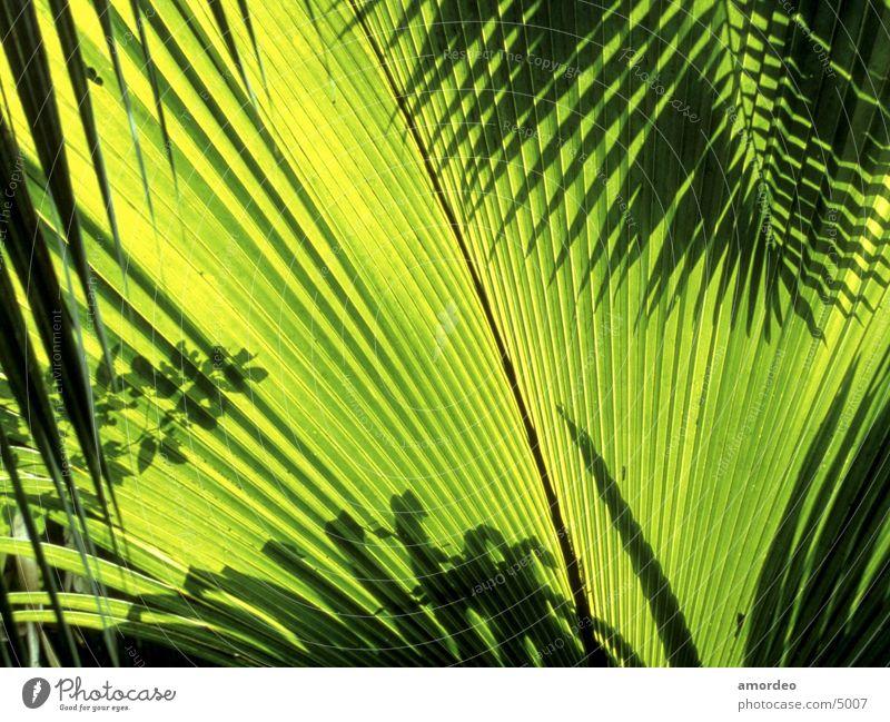 Seychelles Contentment