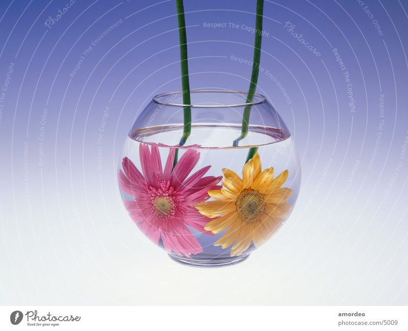 Flower in water Water