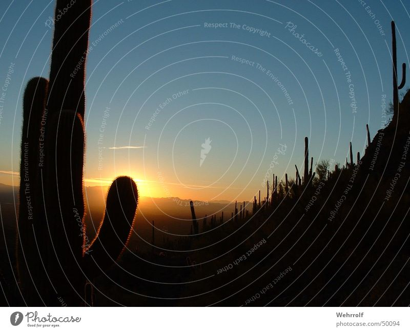 Sky Sun USA Romance Dusk Cactus Arizona